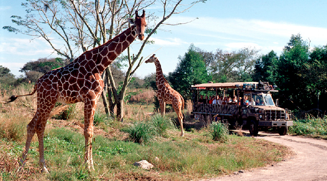 Kilimanjaro Safaris no Animal Kingdom em Orlando