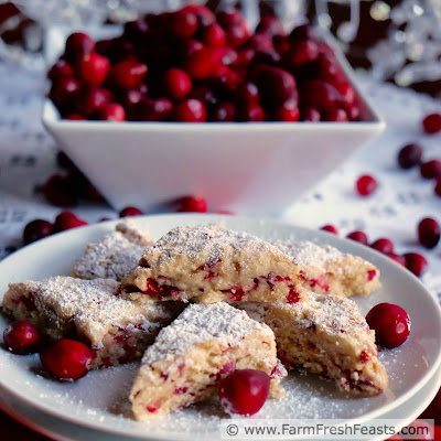 A recipe for tiny tender scones stuffed with chopped fresh cranberries and brightened with orange zest. Make these scones bite size to serve at holiday brunches or coffees.