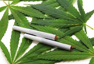 Cannabis leaf, marijuana over white background