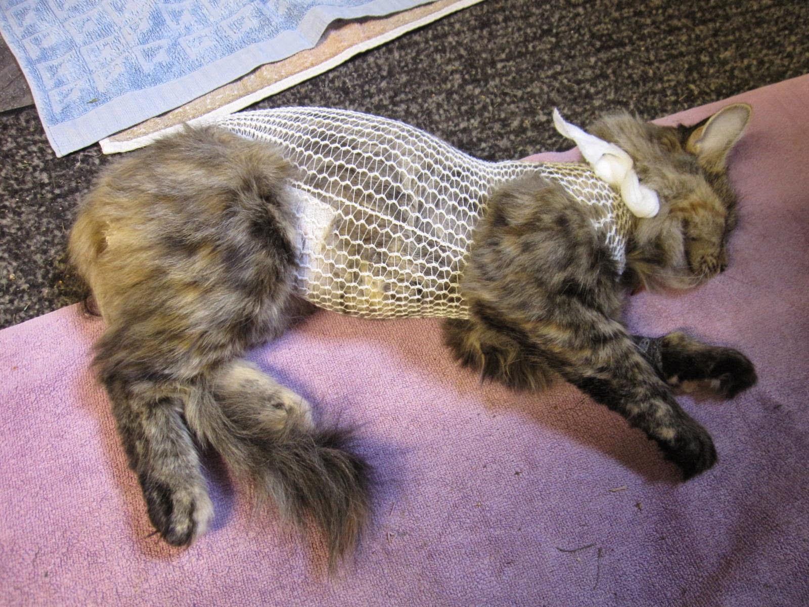 Kissan Sukkapuku Ohje
