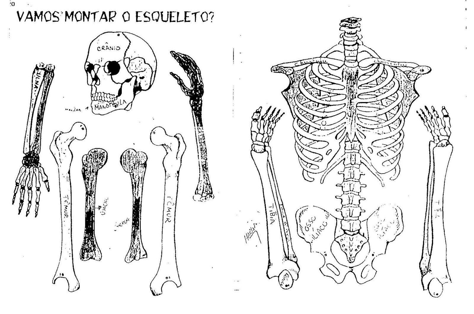 Esqueleto Para Recortar Para Preescolar Ci 234 Ncias