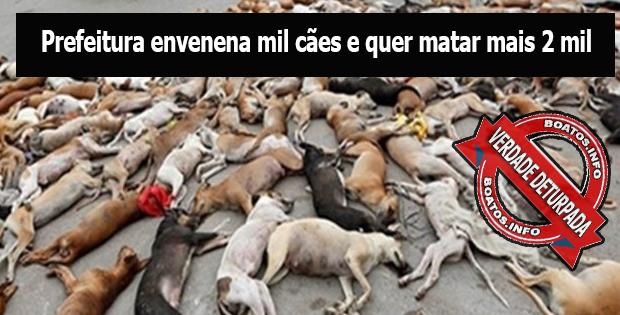 Prefeitura envenena mil cães e quer matar mais 2 mil