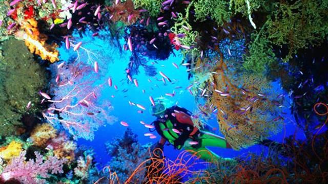 ท่องเที่ยว, แนวหินปะการัง, มัลดีฟส์, สถานที่ดำน้ำ, สถานดำน้ำทั่วโลก, อันดับสถานที่ดำน้ำ, เดอะเกรตแบร์ริเออร์รีฟ (The Great Barrier Reef, Australia)