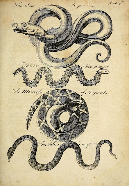 Swords & Stitchery - Old Time Sewing & Table Top Rpg Blog ... Oarfish Skull