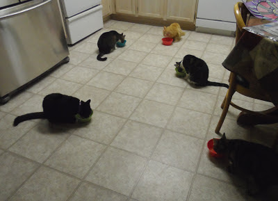 Mika, George, Zoe Pixie & Trixie at dinner time
