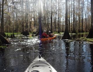 new orleans kayak swamp tour