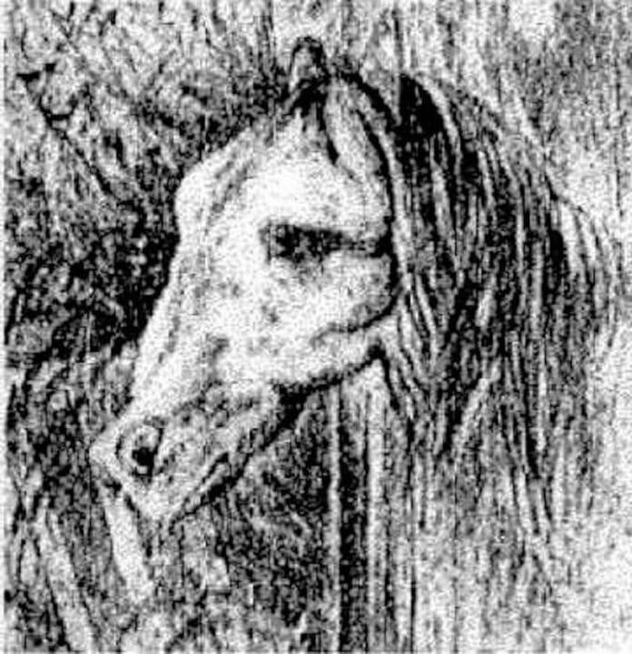 Resultado de imagem para grenouille cheval