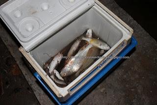 ikan hasil tangkapan