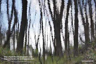 木々の映り込みの写真
