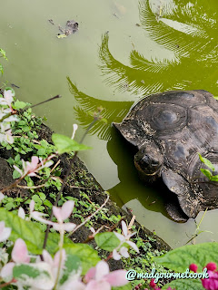 Tortoise at Campo Duro