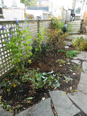 Toronto Leslieville Backyard Garden Fall Cleanup after by Paul Jung Gardening Services