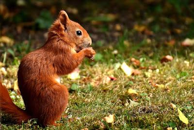 Ekorre - Rörelse för djurrätt