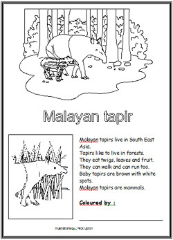 tapir coloring pages for kids - photo#31