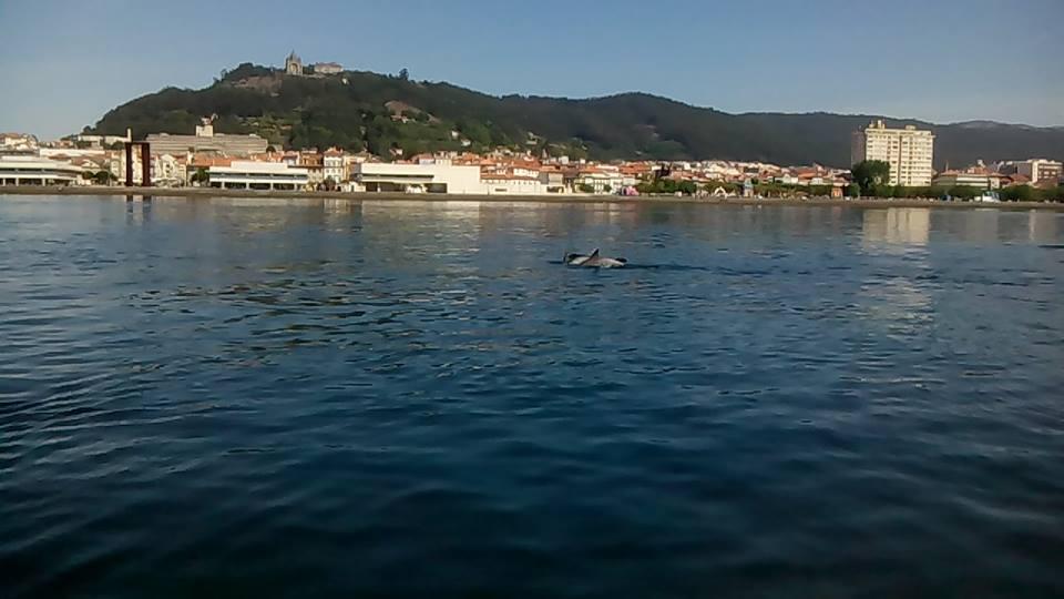 Golfinhos no rio Lima