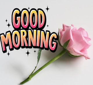 Good Morning Images With Flowers