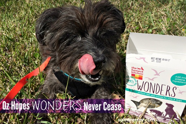 Oz the Terrier The Honest Kitchen Wonders dehydrated pollock fish skins treats for dogs and cats