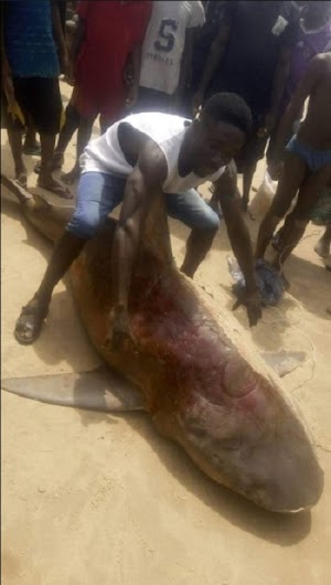 Gigantic Shark Reportedly Killed By A Fisher Man In Bayelsa State (Photos)
