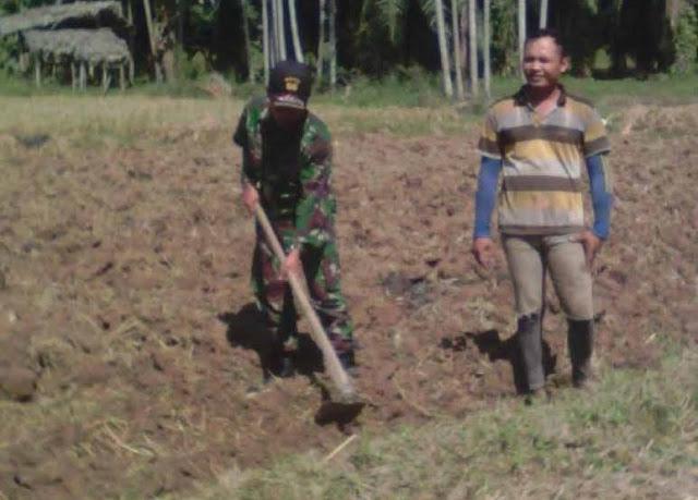 Babinsa Bantu Petani Mengolah Lahan Untuk Menanam Jagung di di Dusun 4 Desa Celawan, Pantai Cermin