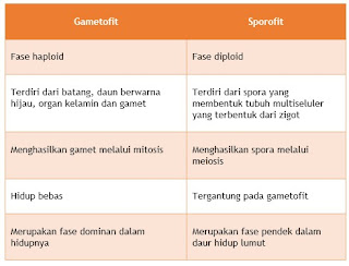 sporofit dan gametofit