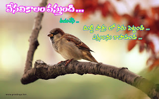 save birds messages in Telugu