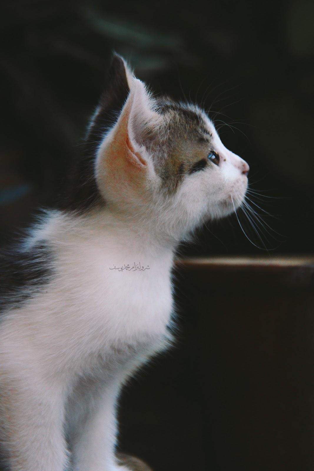 Gambar Anak Kucing Yang Comel Dan Riang - 2