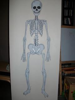 squelette école
