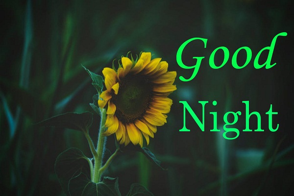 Good Night Sending You Flower