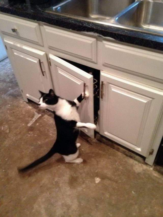 Funny cats - part 338, best cute cat pictures, cat photo