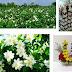 Harga Rangkaian Bunga Terbaru Berbagai Jenis Rangkaian