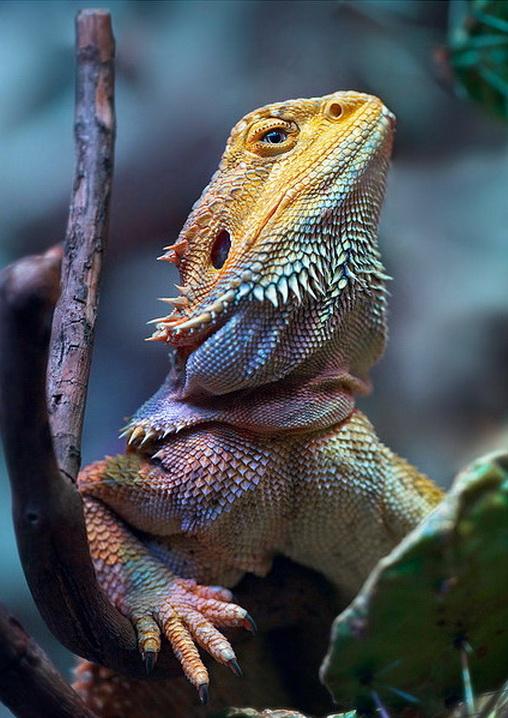 Hidden Unseen: Most Colorfull Lizards