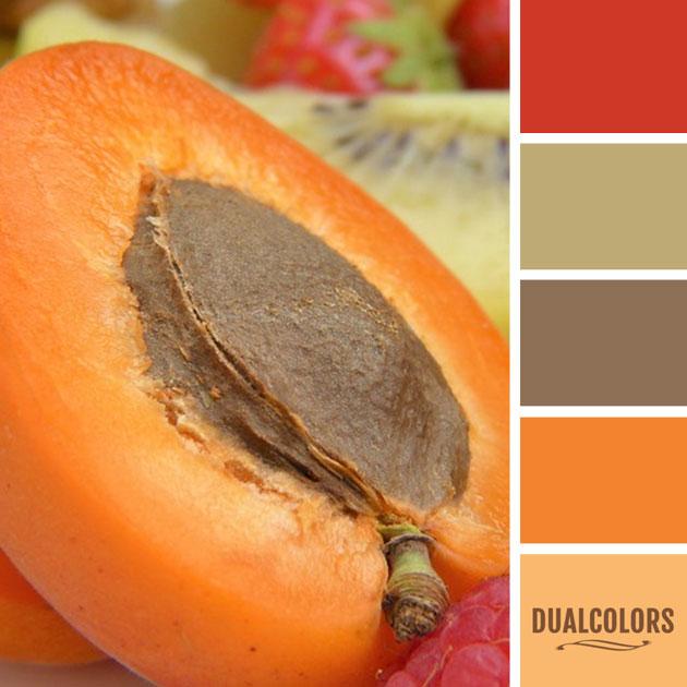 color_paleta_72