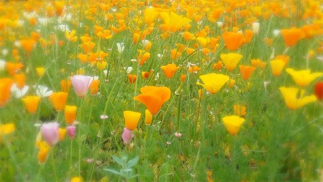 summer flower wild garden