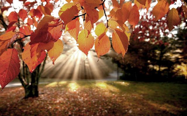 Herfst in het park met opkomende zon die door de bomen schijnt