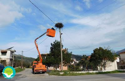Επισκευή φωλιάς πελαργού στο χωριό Καρτέρι