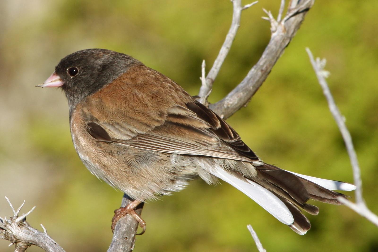 Lola Nova - Whatever Lola Wants: For the Birds
