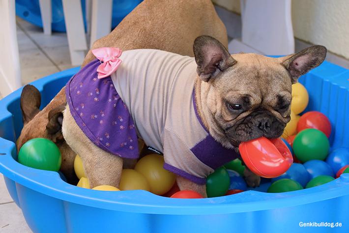 Bällchenbad für Hunde