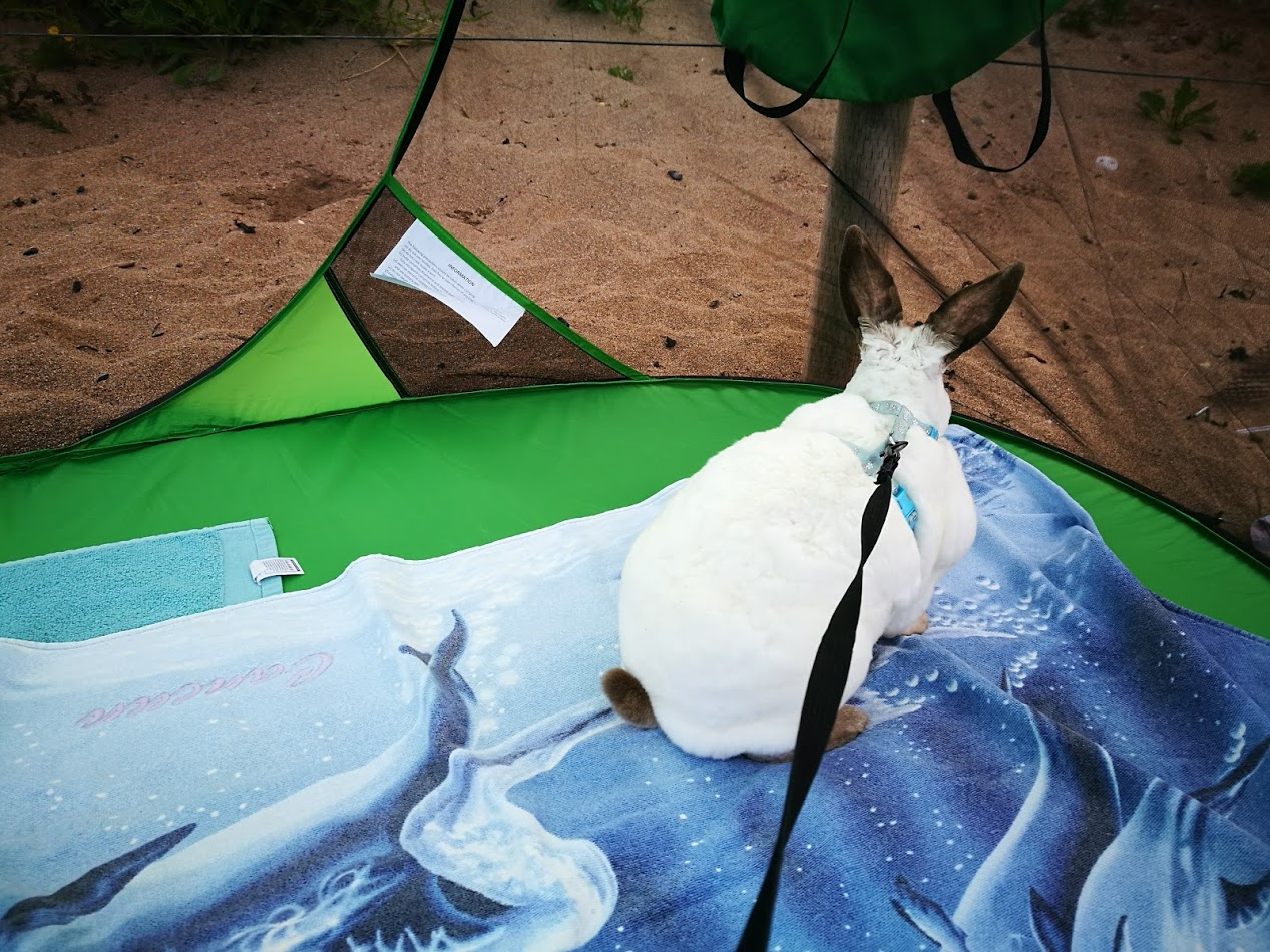 And every time I zipped the tent up with him inside he would try to chew his way out.Iu0027m afraid the Speedy is a chewer and can get grumpy easily. & Speedy the cheeky house bunny: Speedy Review Sansbug Pop up ...