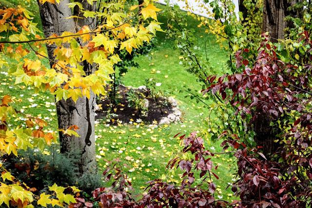 Hojas amarillas, rojas y naranjas en otoño