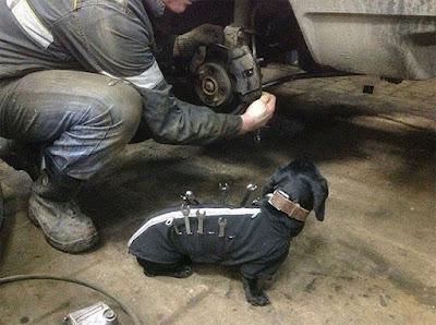 Собака-помогака: маленький помощник автомеханика ))