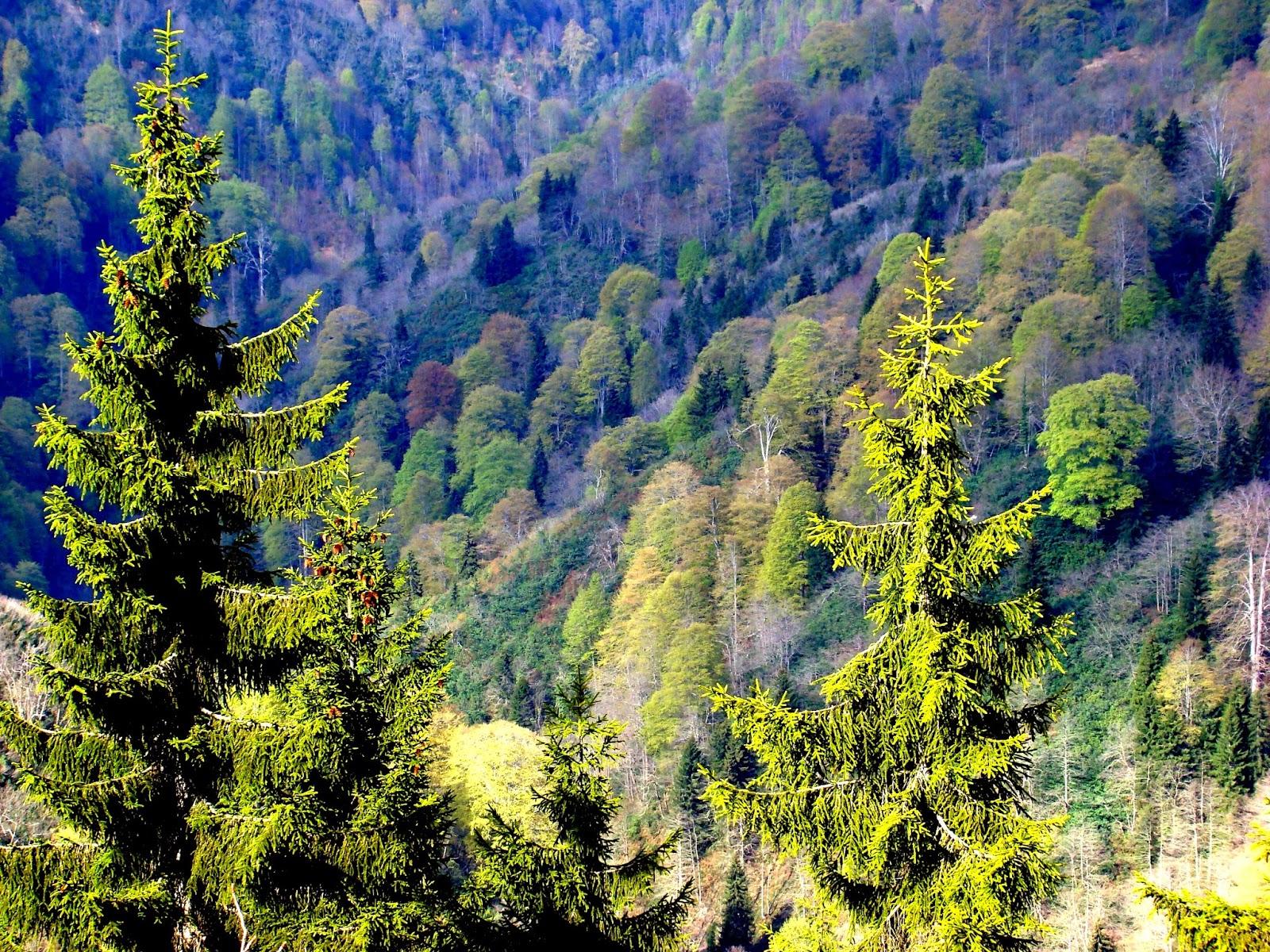 ormanlardan nasıl yararlanırız