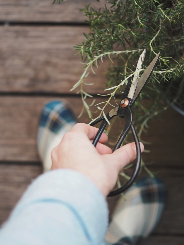 Ciseau pinceur pour jardiner