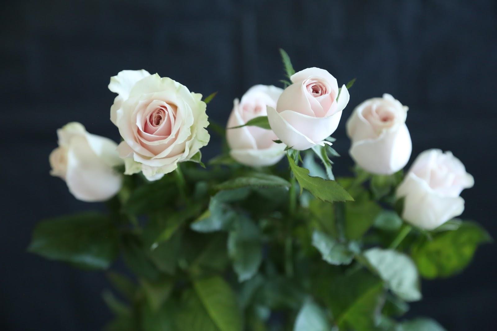 Freshcutfloral Wholesale Fresh Cut Flowers Fillersgreenery And