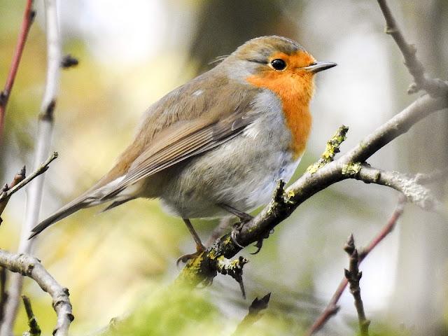 Fakta Menakjubkan Tentang Burung