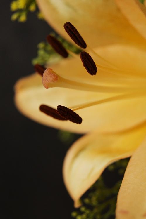 Blog & Fotografie by it's me! - braune Blütenstempel einer lachsfarbenen Lilie