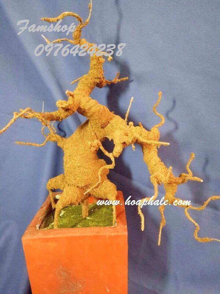 Goc bonsai mai dao o Phu Xuyen