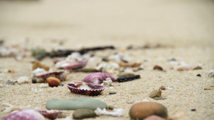 Wallpaper: Nature: Beach, sand, shells 2