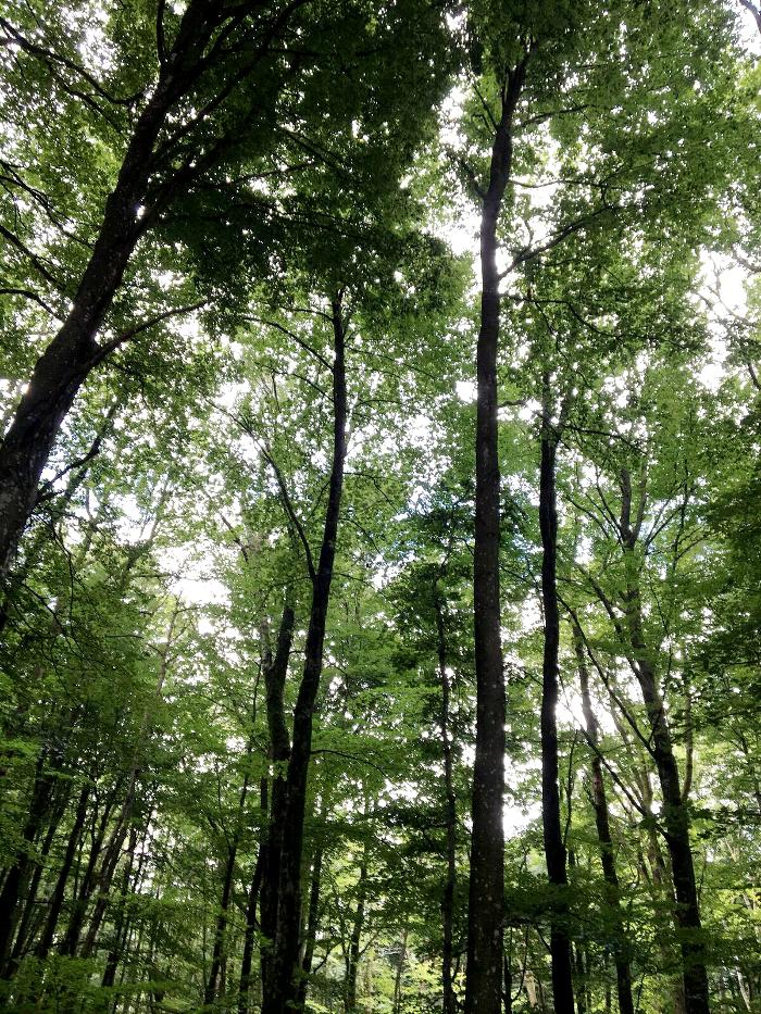 pomeranian, rolfstorp, bokskog, bokskogar, skog, skogen, naturreservat, varberg, halland, västkusten