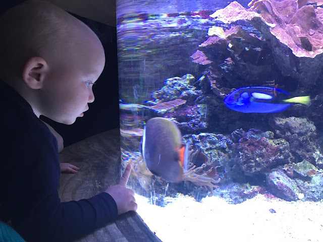 My toddler looking in to a tank and touching the glass. The tank contains rocks and a couple of fish are visible including a 'Dory' fish