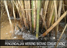 11 Daftar Bahan Aktif Pestisida untuk pengendalian hama wereng batang coklat (WBC)