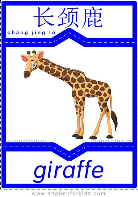 Giraffe - English-Chinese flashcards for wild animals topic